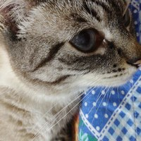 Imagem de perfil: Márcia Dias